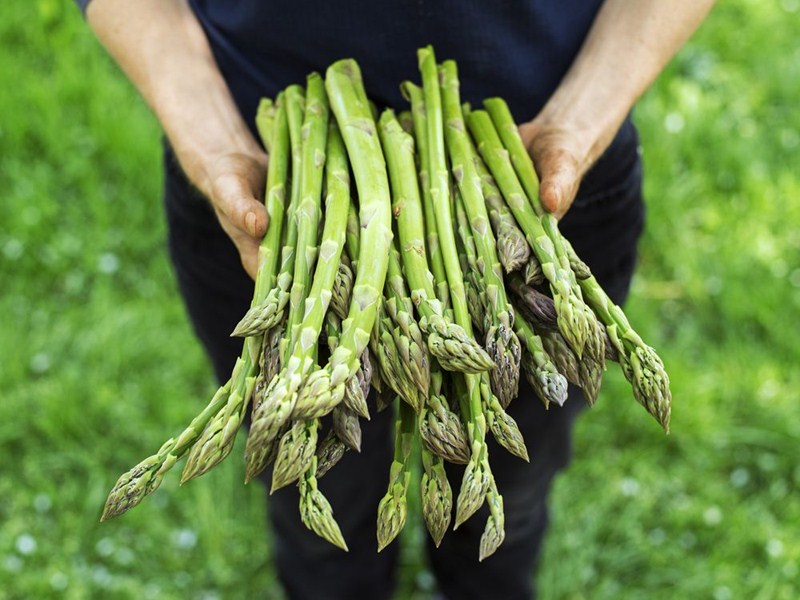 Where to buy locally grown asparagus