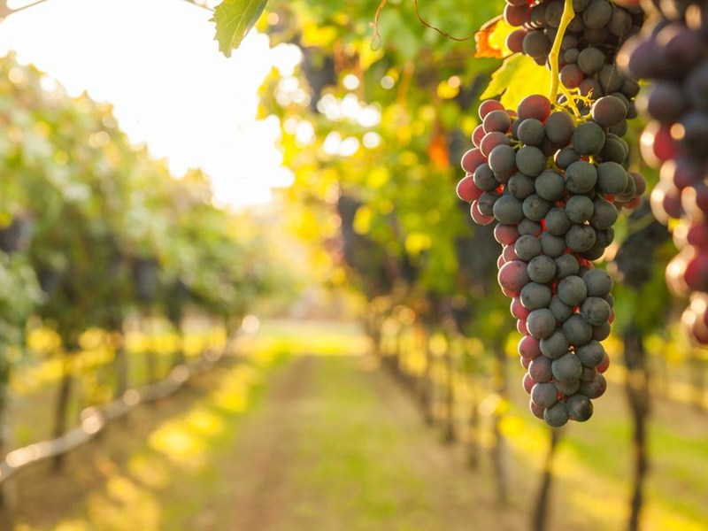 10 local vineyards to visit