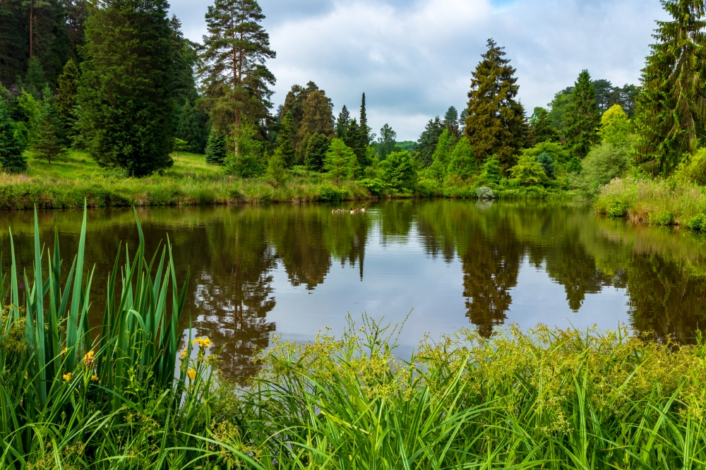 Lonely Planet names Bedgebury as one of the 'most unmissable sights'