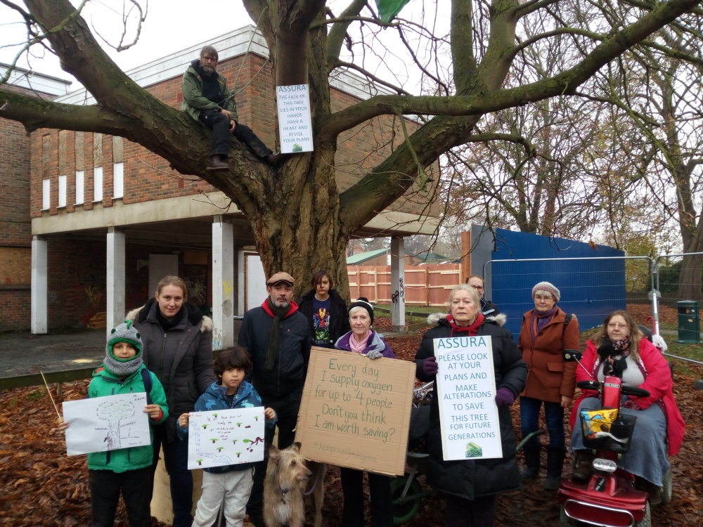 Stay of execution for tree but council are 'environmental vandals'