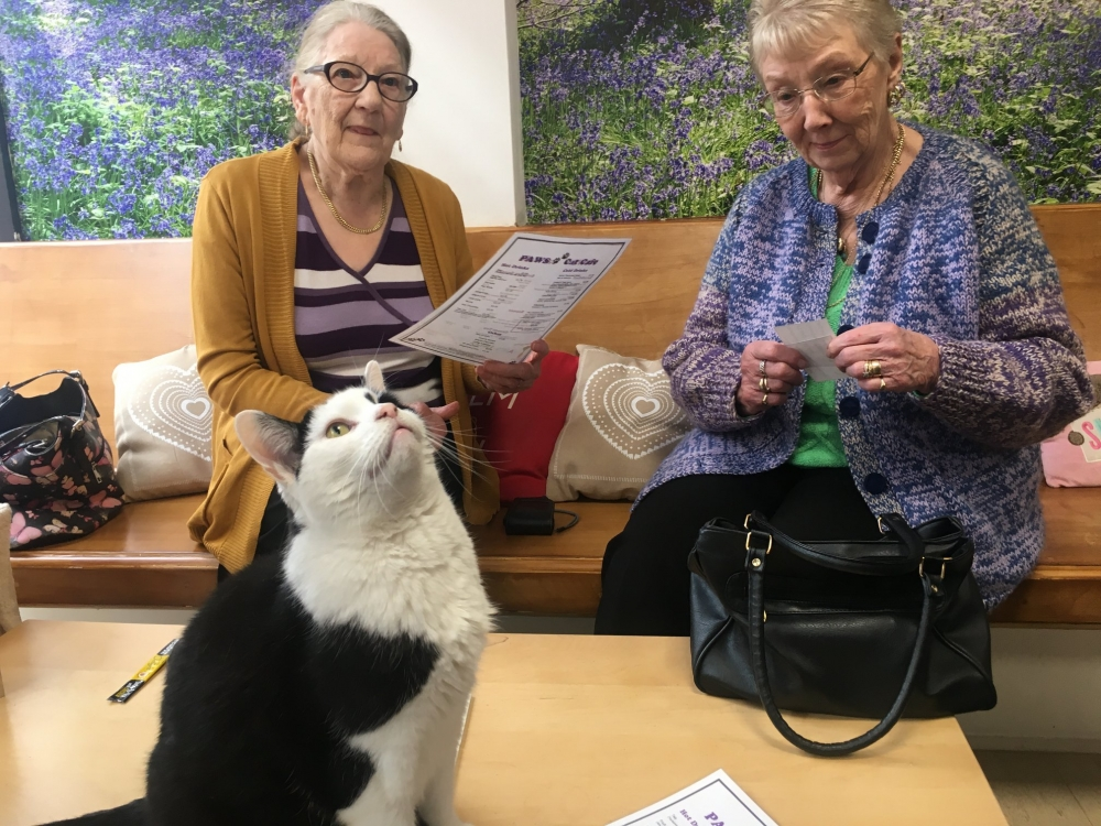 Feline better as trip to Tonbridge Cat Café helps fight loneliness