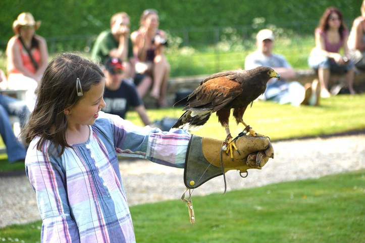 Huxley Birds of Prey