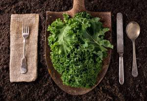 KILLER BLOW WHEN IT COMES TO KALE - Jay Rayner doesn't think we should treat food as pharmaceuticals